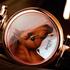 Год Лошади в новых часах Amadeo Fleurier 43 от Bovet