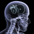 Вопросы нейропсихологии в часоделии