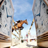 Jaeger-LeCoultre на всемирном чемпионате по конному спорту на Гран-При в Валкенсворде